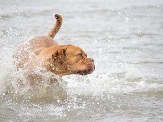 Chorvatsko se psem